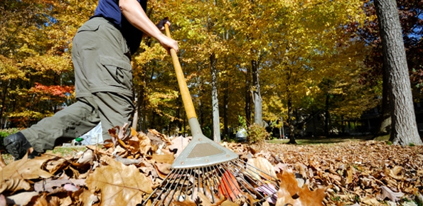 Fall Leaf Collection Oct. 1 - Nov. 15